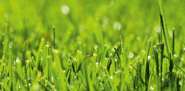 Concimazione autunnale del prato tuttogiardino - Quando seminare erba giardino ...