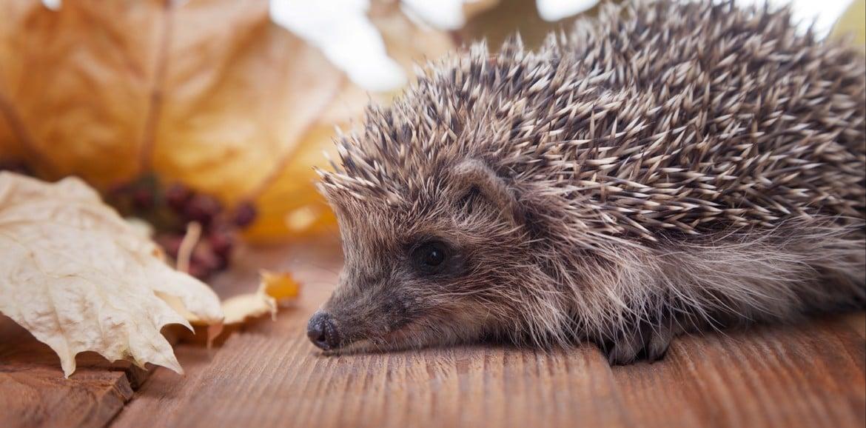Buonanotte al riccio tuttogiardino accessori articoli da giardino cibo per animali - Riccio in giardino ...